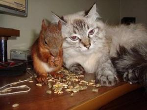 Catandsquirrel