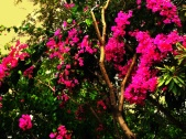 More tropical flora on Vieques Island