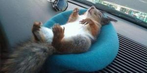 Squirrel3