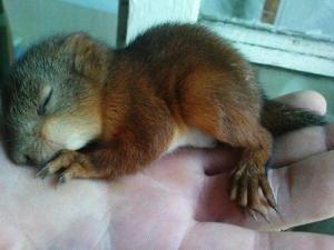 Squirrel3445