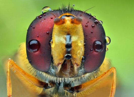6-CATERS-Bugs-In-Shades-10-jpg_210419