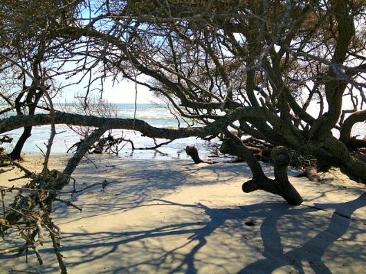 follys beach