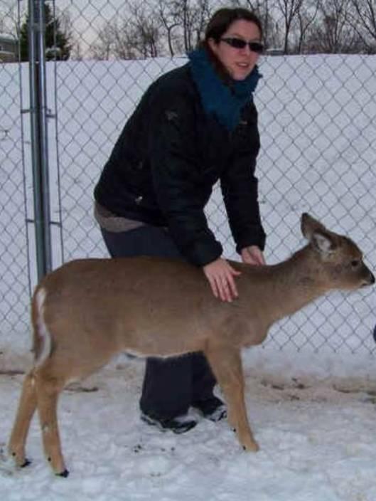 gan-police-pet-deer-012813-2-3_4_r536_c534