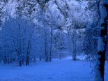 Winter-Scene-christmas-2735688-1024-768