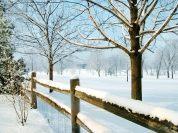 winter scenes 1 (38)
