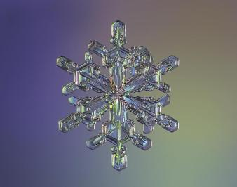 8b96ec50-94cc-11e3-8b36-81aadaa22db2_0_CATERS_Incredible_Micro_Snowflakes_01
