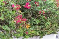 Key West Floral 2014