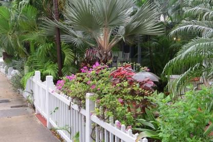 Key West Floral
